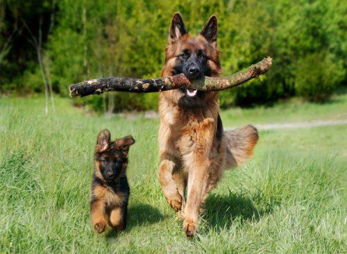 Pet Insurance for Older Dogs