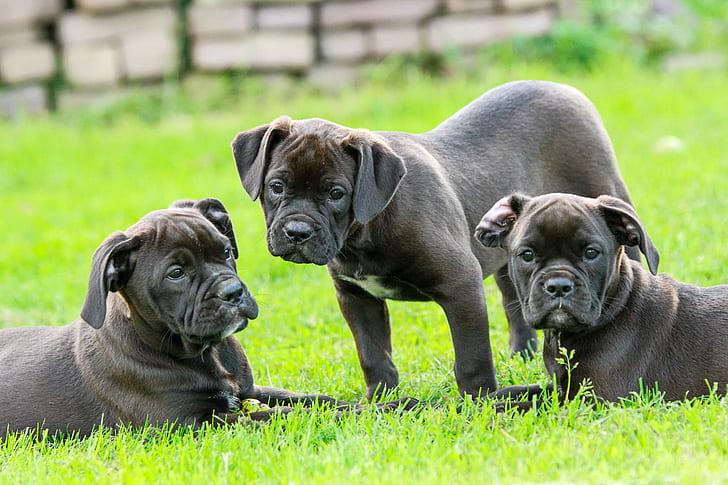 Cheapest Pet Insurance for American Bulldogs