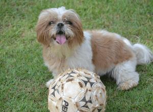 Best dog insurance for Shih Tzus