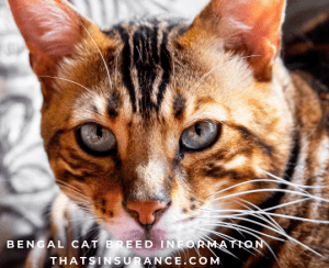 The Best Pet Insurance for Bengal Cats