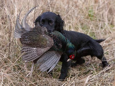 Best Pet Insurance for Hunting Dogs