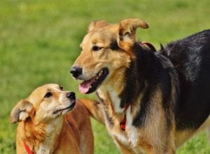 A guide to buying pet insurance for a mixed breed dog