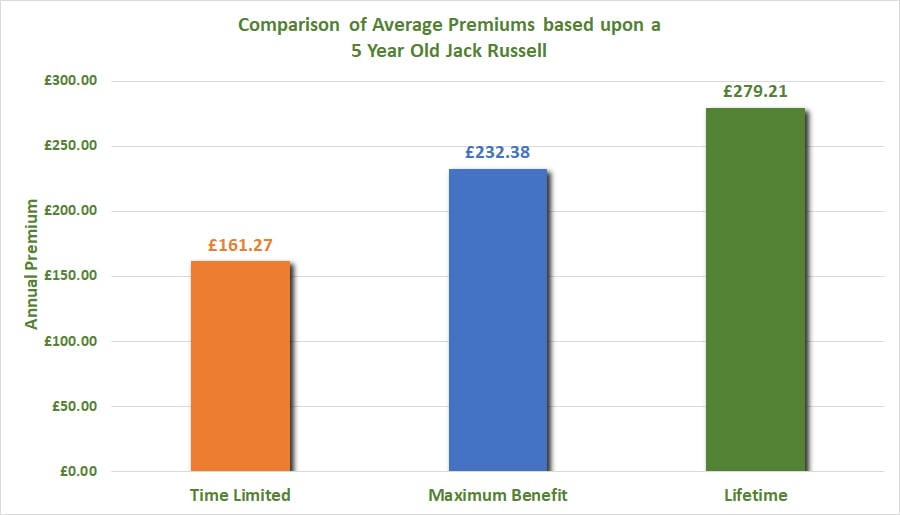 Jack Russell Dog Insurance Compare and Buy