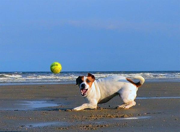 Best dog Insurance for Jack Russells